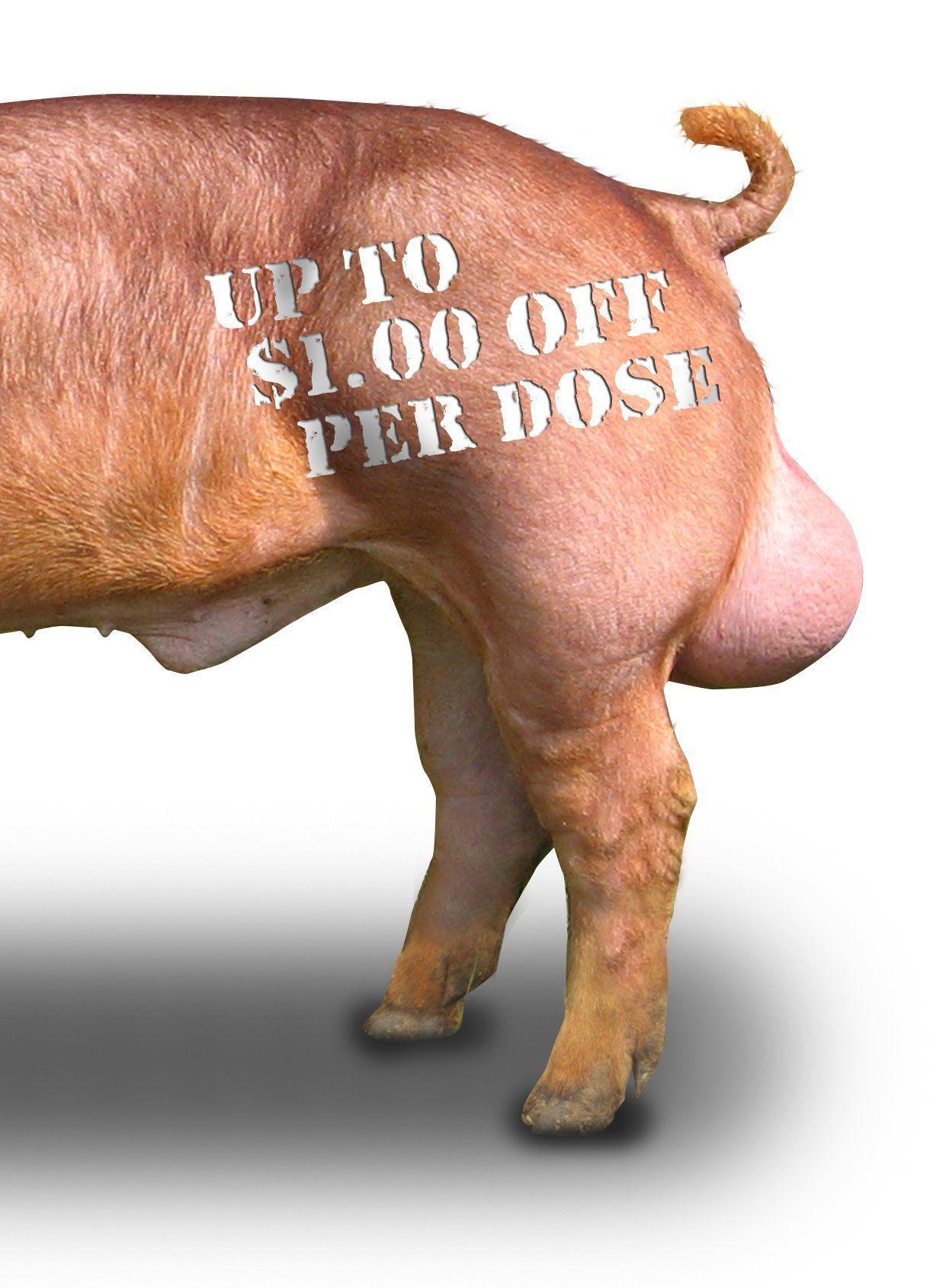 Wonka reccomend Swine sperm for sale