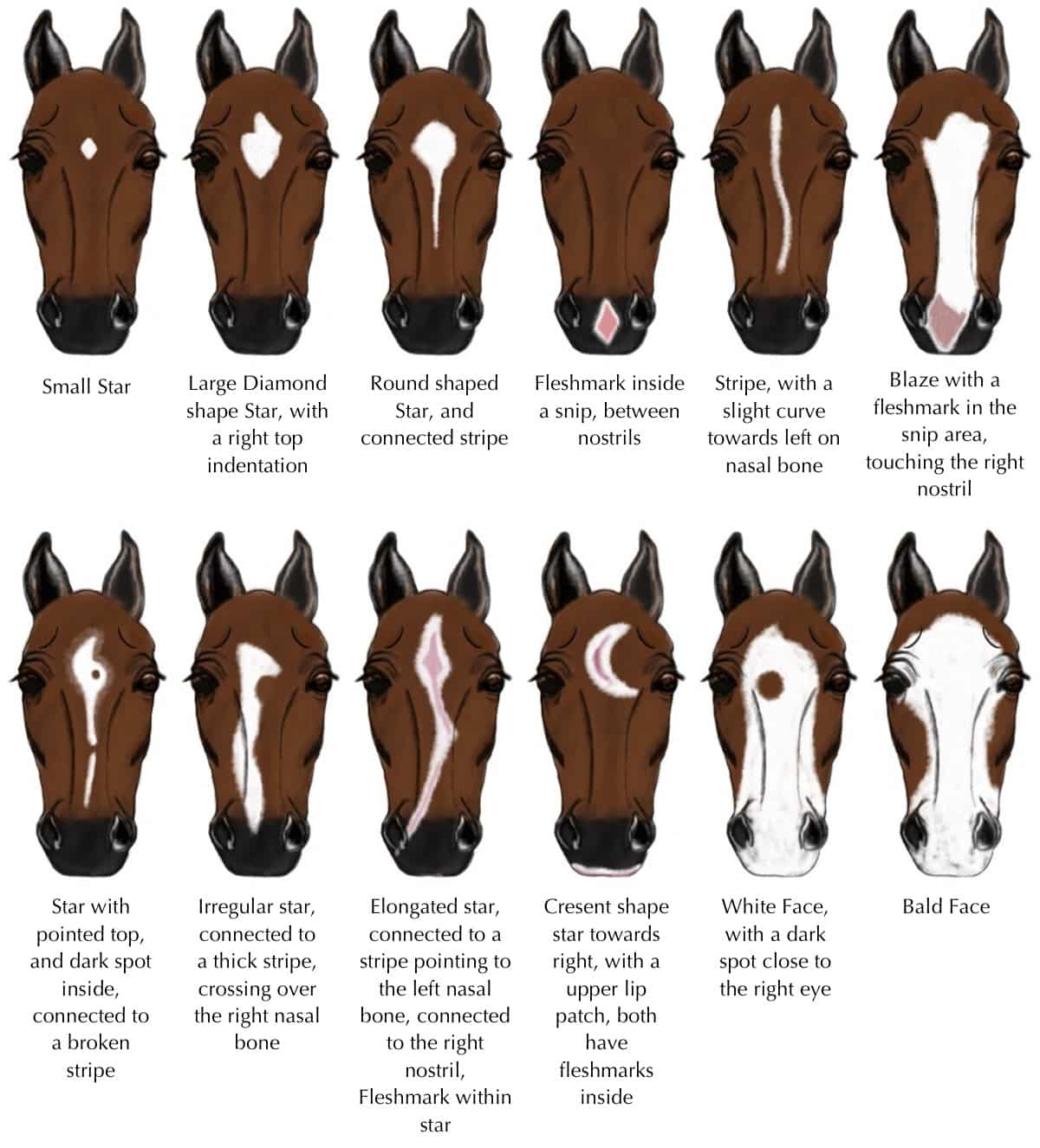 Equine facial marking