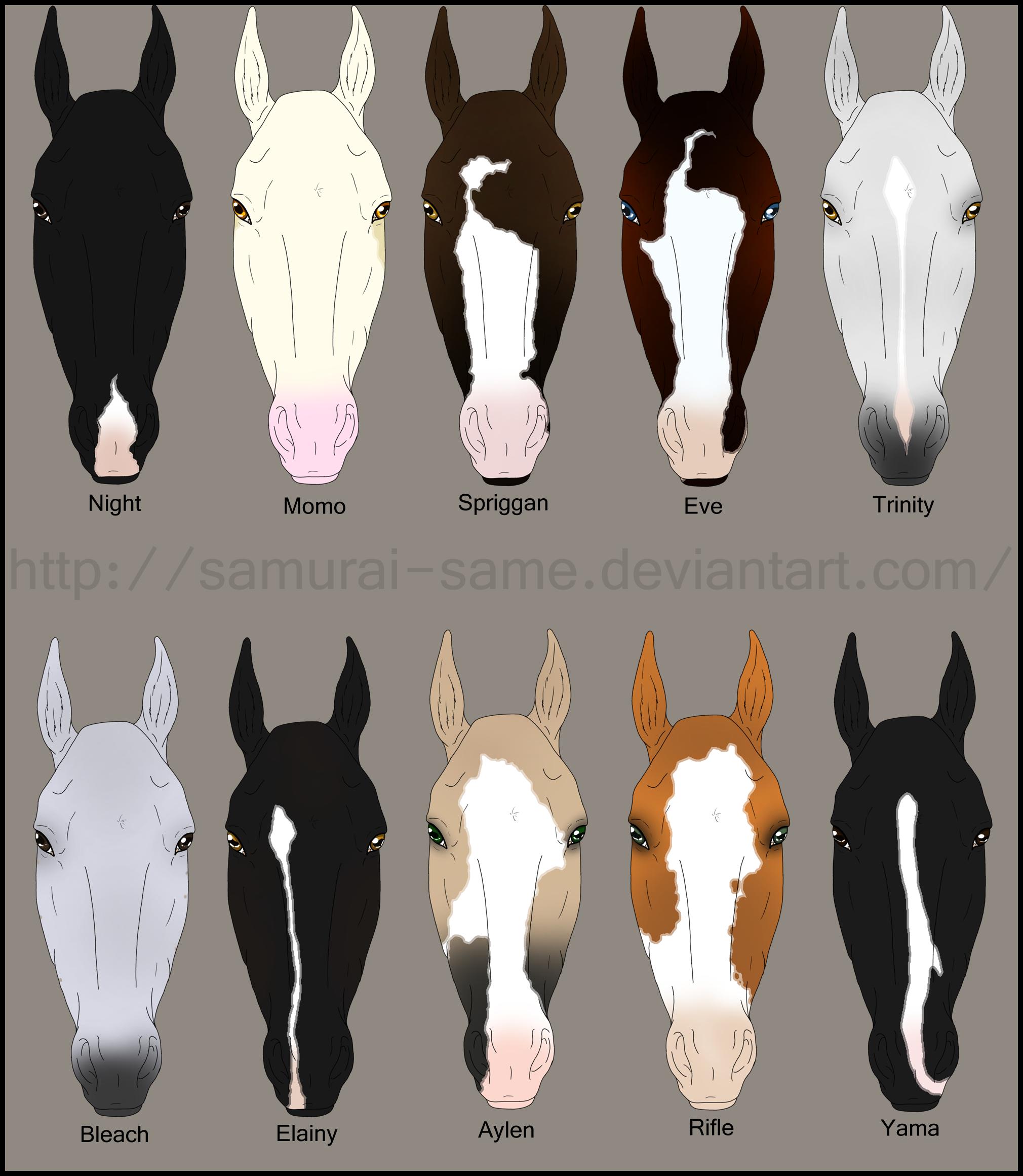 Hose reccomend Equine facial marking