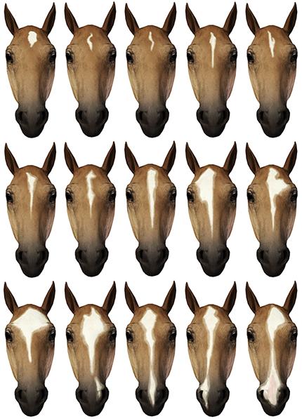 Ace reccomend Equine facial marking