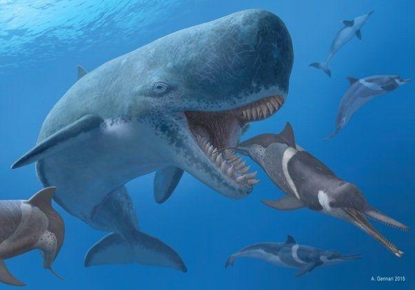 Jewel reccomend Modern sperm whale hunting